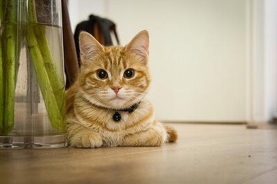 cat in Oxford home